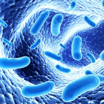 bacillus-subtilis-restore-3